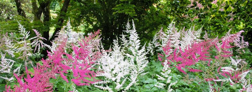 Flowers at Duntrune Garden